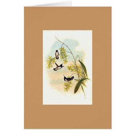 Gould - Heloisa's Flame-Bearer Hummingbird Cards
