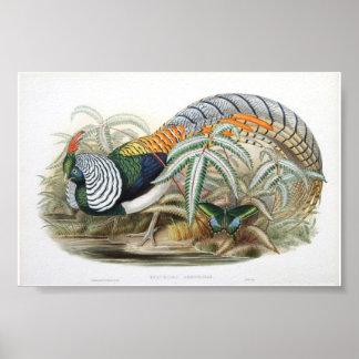 Gould - Lady Amherst's Pheasant Portfolio Poster
