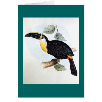 Gould - Osculant Toucan Card
