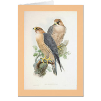 Gould - Red-Naped Falcon Card