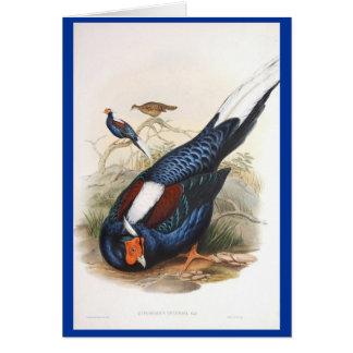 Gould - Swinhow's Fireback Pheasant Card