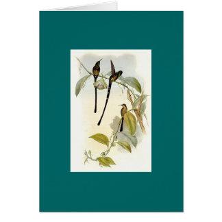 Gould - Train-Bearer Hummingbird Greeting Card