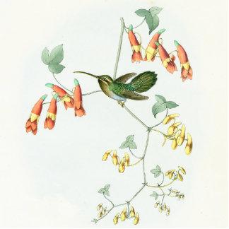 Goulds' Hummingbird Ornament Photo Cutouts