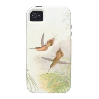 Goulds Hummingbirds iPhone4 Case