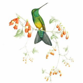 Goulds' Hummingbirds Ornament Cut Outs