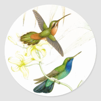 Goulds' Hummingbirds Stickers