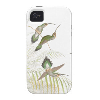 Goulds Hummingbirds Vibe iPhone 4 Cover