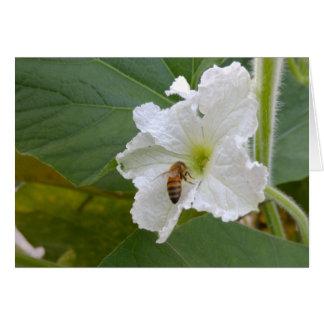 Gourd Flower & Bee Blank Card