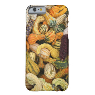 Gourd, Gourd Everywhere Barely There iPhone 6 Case