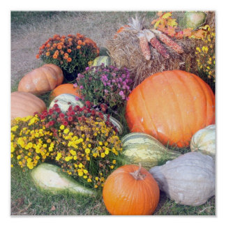 Gourds and Pumpkins Poster