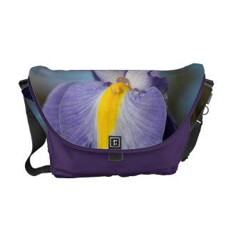 Gouttes de pluie sur un iris pourpre et jaune besaces