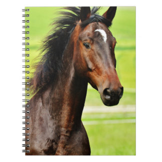 Graceful Brown Horse Green Grass Spiral Notebook