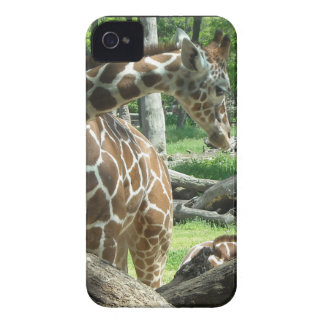 Graceful Giraffe iPhone 4 Case-Mate Case