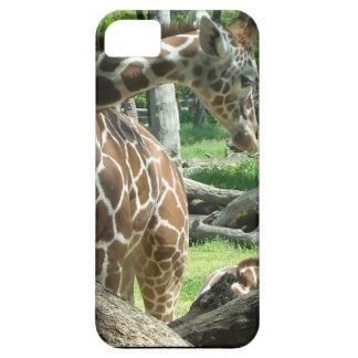 Graceful Giraffe iPhone 5 Cases