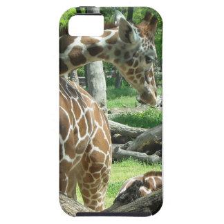 Graceful Giraffe iPhone 5 Cover