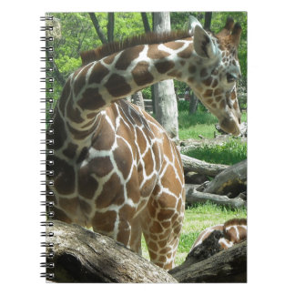 Graceful Giraffe Spiral Notebook