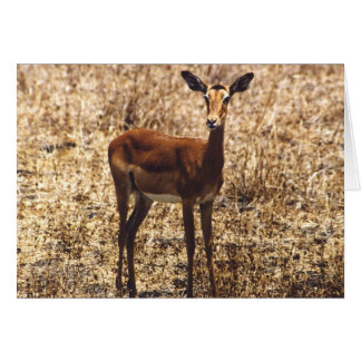 Graceful Lady (Impala) Card
