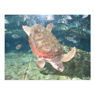 Graceful Turtle Postcard
