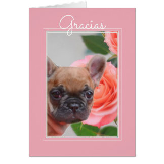 Gracias Spanish Thank You French Bulldog Card