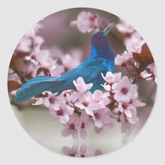 Grackle and Crabapple Blossoms Sticker
