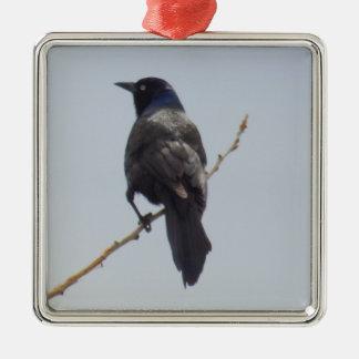 Grackle Bird Christmas Ornament