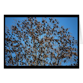 Grackles card