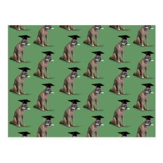 Graduate Coyote Postcard