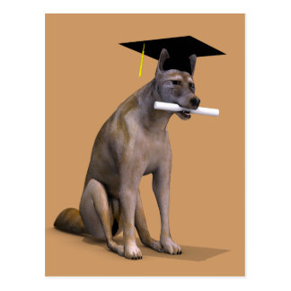 Graduate Coyote Post Card