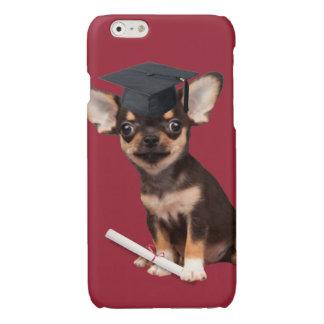 Graduation Chihuahua dog