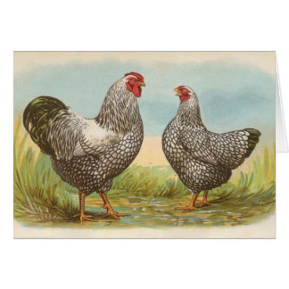 Graham - Silver Laced Wyandotte Chickens Card