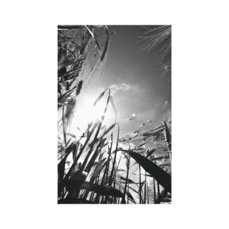 Grain black and white stretched canvas print