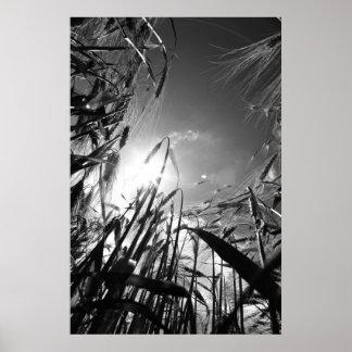Grain black Weis Poster