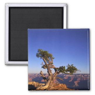 Grand Canyon, Arizona, USA Square Magnet