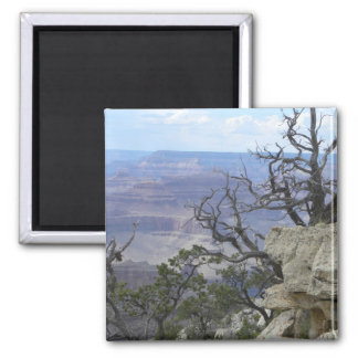 Grand Canyon trees magnet