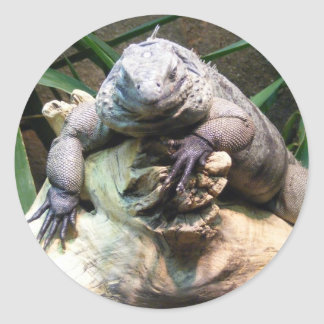 Grand Cayman Blue Iguana Classic Round Sticker
