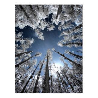 Grand Cypress Postcard