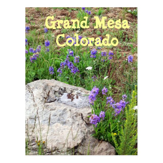 Grand Mesa, Colorado Postcard
