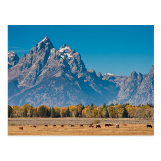 Grand Teton Postcard