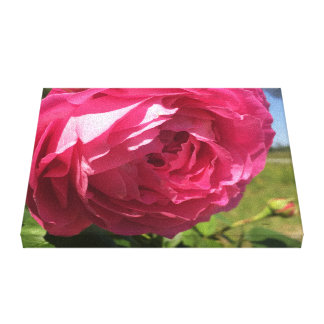 Grandmas Rose Bush Canvas Print