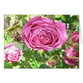 Grandma's Rose Card