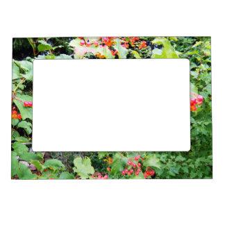 Grandpa's Cherry Bush Magnetic Photo Frames