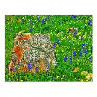 Granite and Wildflowers on Willow City Loop Postcard