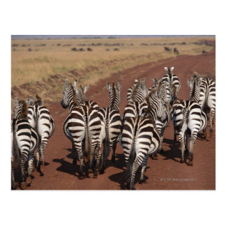 Grant Zebra 4 Postcard