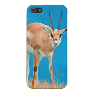 Grant's Gazelle (Gazella Granti) Ewe Portrait iPhone 5/5S Cover