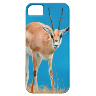 Grant's Gazelle (Gazella Granti) Ewe Portrait iPhone 5 Case