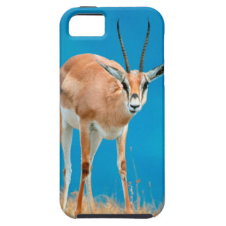Grant's Gazelle (Gazella Granti) Ewe Portrait iPhone 5 Covers