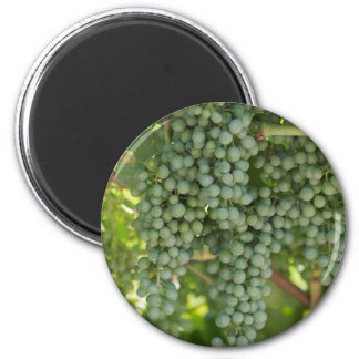 grape and vineyard 2 inch round magnet
