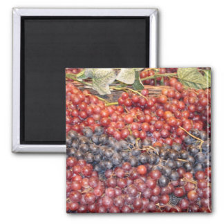Grape Harvest Square Magnet