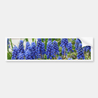 Grape Hyacinth Bumper Sticker
