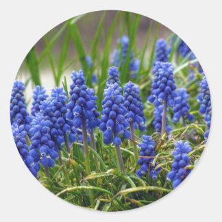 Grape Hyacinth Classic Round Sticker